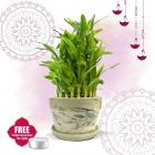 Nurturing Green Lucky Bamboo 2-layer Plant in Green Decorative Ceramic pot (Small Good-Luck Bamboo Plant Indoor for home, Tables, Office Desks) with FREE tea light for Diwali Gifting
